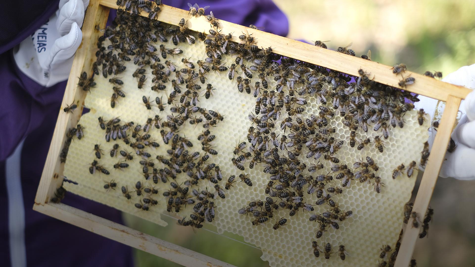 Nas Colmeias da Joana é possível conviver com as abelhas de perto